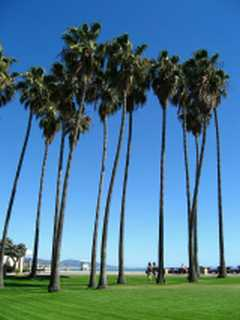 Dana Point Doheny Palms