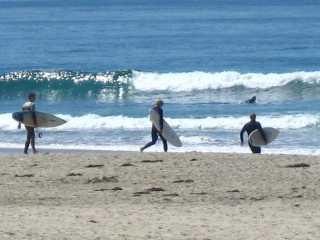 Dana Point Surfers