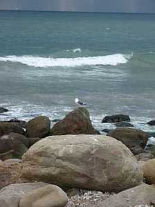 El Capitain State Beach waves and seagull