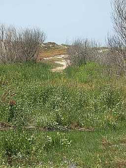 McGrath State Beach sand dunes