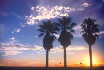 Ventura beaches, Ventura California, sunset, palms