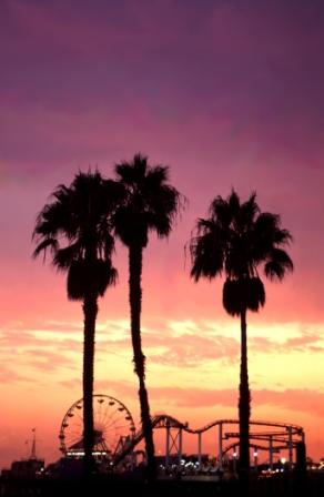 Santa Monica Sunset Palms